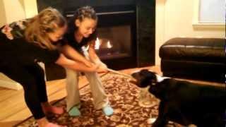 Bull Terrier Tug Of War Vs Two 9 Yr Old Girls.