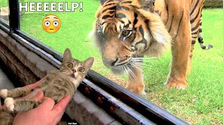 Pets That Will Make You Laugh All Day Long 😂