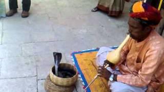Snake dance in India