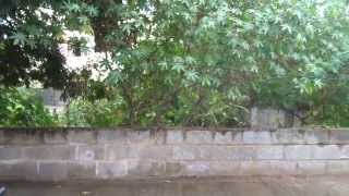 Land for Sale 1200 sqft Rs.19.20L in Bagalur Cross  Refind:37170