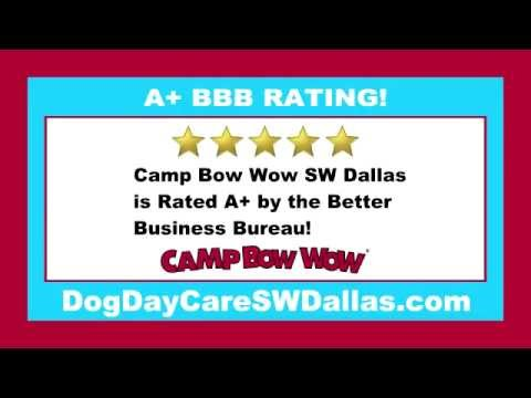 Dog Day Care Arlington TX South Free Trial Day 214-466-2878