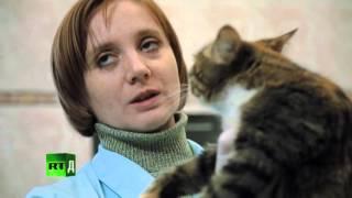 Ветеринарная клиника  Четвертая серия