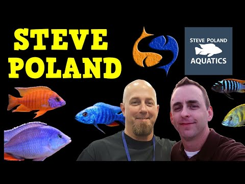 All African Cichlids  with Steve Poland Cichlids! Tank Talk Live Presented By KGTropicals!!