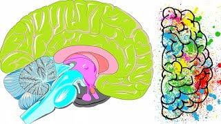 Flujo cerebro? el al afectar ¿Qué puede sanguíneo