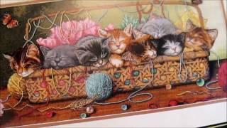 "303 ЗАЯВКА НА УЧАСТИЕ В СП ""Dimensions""//Дименшенс//Новорожденные котята (Kitty litter)"
