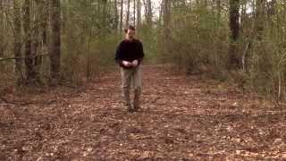 Nature Break 6: Leaves