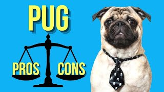 Pug Pros and Cons  ( A Must Watch for New Potential Pug Owners )