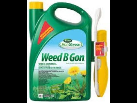 Scotts Ecosense Weed B Gon Did Not Kill The Dandelions