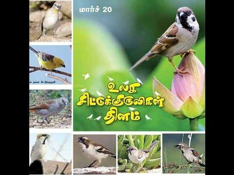 Image result for சிட்டுக்குருவிகள்