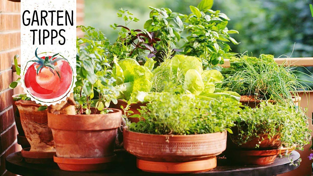 Urban Gardening Kräuter Gemüse Für Balkon Und Terrasse Volmary