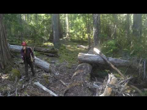 Siskiyou Mountain Club Logging