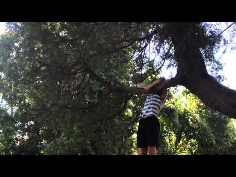Arboreal Locomotion: Swing Pop