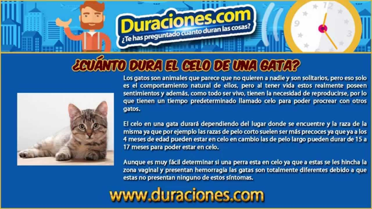 Cu nto dura el celo de una gata youtube for Cuanto dinero tiene un cajero