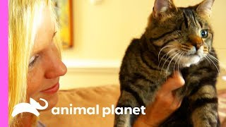 Do Cats Really Have 9 Lives?! | Cats 101