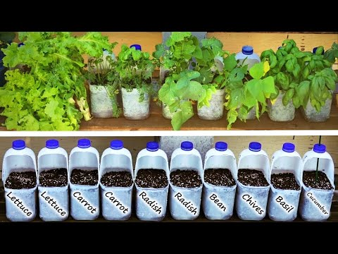 GROW Vegetables in MILK Bottles and SAVE Money