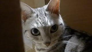母ちゃんのもとへ今すぐ駆けつけたい猫~母ちゃんドコ?! -Where is Mom ? I have to go...! thumbnail