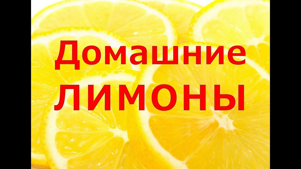 Насадка спрей - распылитель для лимона и цитрусовых обзор и цена в .