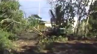 Land Clearing in Hilo Hawai