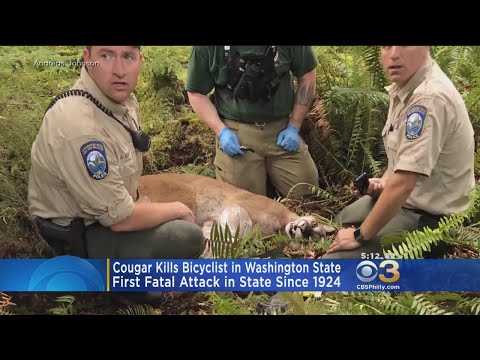 Cougar Kills Bicyclist In Washington State