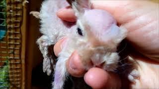 Родила крольчиха в ночь непонятно что! Мутант? Разбираемся.