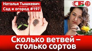 Как правильно провести cкарификацию семян