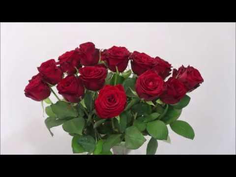 How To Make Roses Last Longer