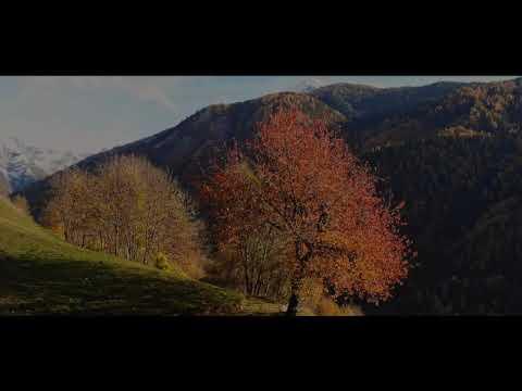 Golden Autumn | Resolve Productions