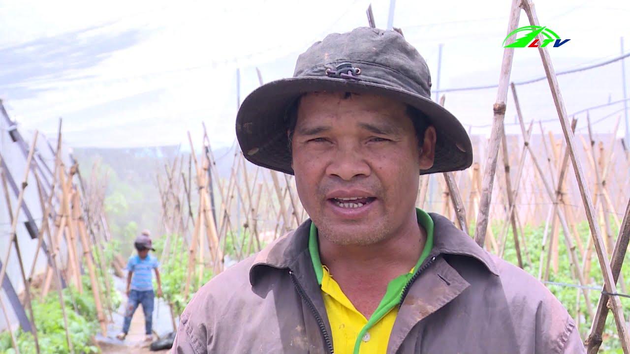 Người dân Đa Quyn làm nông nghiệp công nghệ cao | 365 Ngày Chuyển Động | Lâm Đồng TV