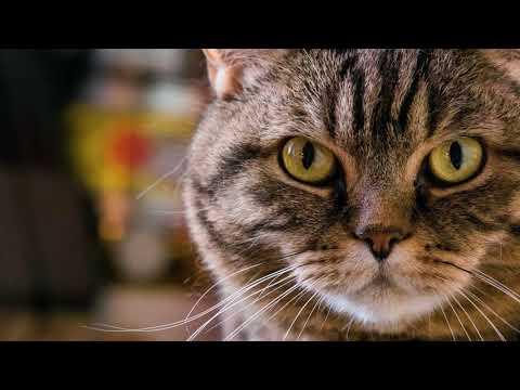 Вопрос: Почему кот ест только сухой корм?