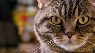 Как отучить кота есть только сухой корм?