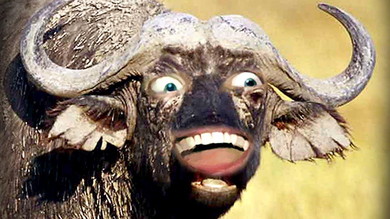 L Bearden Buffalo BUFFALO BUFFALO BUFFAL...