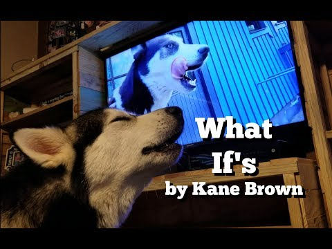 What Ifs by Kane Brown & Lauren Elena Featuring Tonka The Malamute & Luna the Husky