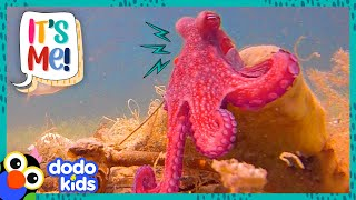 Meet A Bunch Of Goofy Animals Who Are Best Friends With Humans! | 30 Minutes Of Animals | Dodo Kids