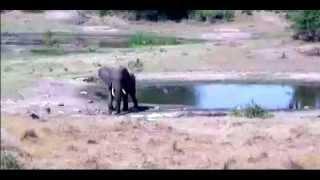 Дикая природа Южной Африки. Слон