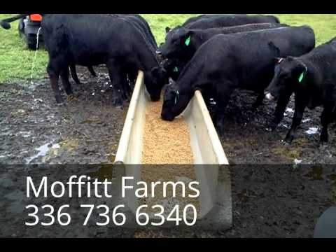 CATTLE FEED TROUGHS