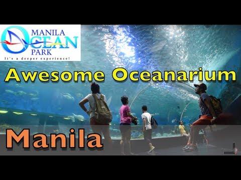 Trapped in a Manila Oceanarium