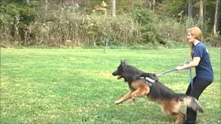 Delaware Pesonalized Dog Training