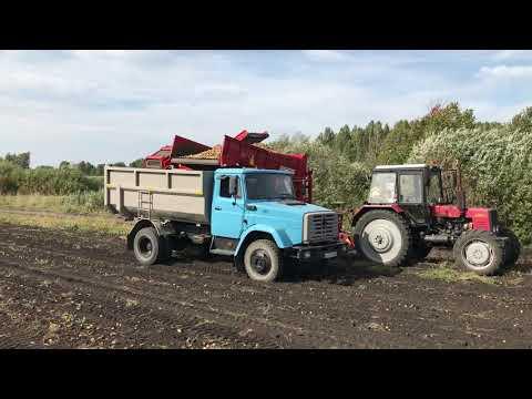 Заготовка и продажа картофеля 2020 с поля. Сорта: Королева Анна, Торнадо, Лабелла.