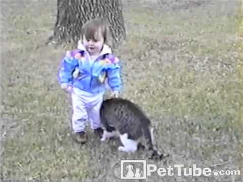 Cat Bumps Baby- PetTube