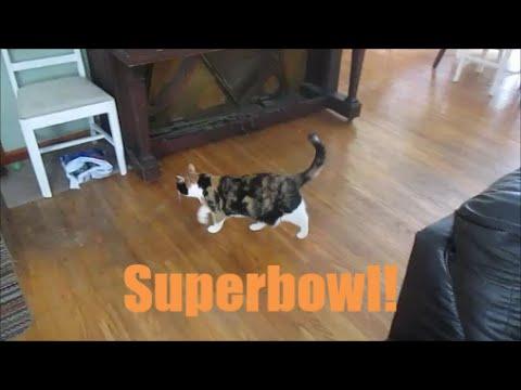 SUPERBOWL!!!(Sunday February 1st,2015)