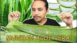 ada ke orang makan ALOE VERA BANYAK MACAM NI? (mukbang malaysia) LIDAH BUAYA