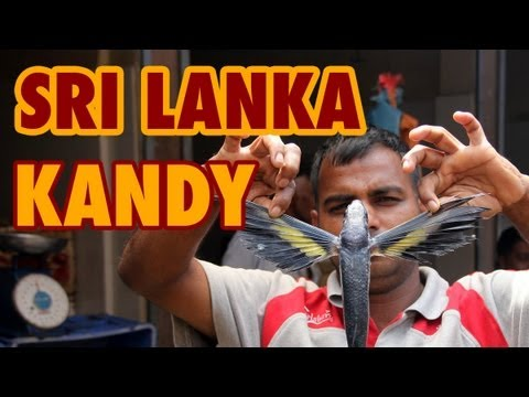 Kandy, Sri Lanka - Travel Video (HD)