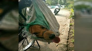 After These Dogs Were Stuffed Into Bags On A Bike, They Could So Easily Have Met A Horrific End