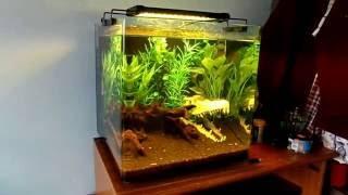 rgb aquarium lights demo