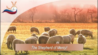 The Shepherd of Mercy.