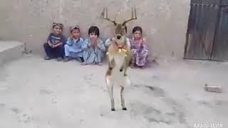 Funy Animal dance 2019