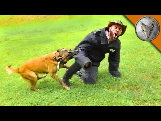 BAD BITE! - K9 Attack