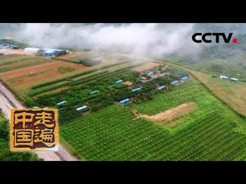 Download 《走遍中国》 系列片《大国基业——大国金路》(5)绿满金山 20180810    CCTV中文国际