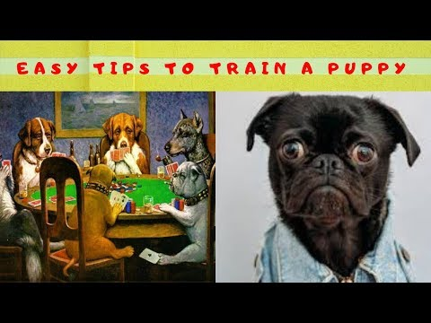how-to-potty-train-a-puppy/how-to-train-a-dog