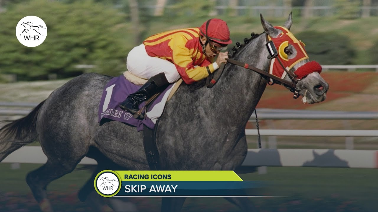 SKIP AWAY   THE GORGEOUS GREY WHO COST $22,500 AND WON NEARLY $10 MILLION